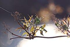 Blue flowers black background macro Stock Images