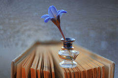 Blue flowers on book Royalty Free Stock Photos