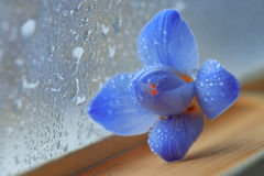 Blue flowers on book novel Royalty Free Stock Images
