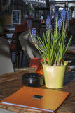 Blue flowers in the bucket with menu and ashtray on the table in restaurant. Blue spring flowers in the bucket with menu and ashtray on the table in restaurant Stock Images