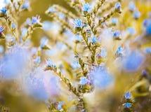 Blue flowers close up Stock Photos
