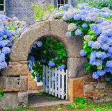 Blue flowers decorating a gate in Brittany, France Royalty Free Stock Photography