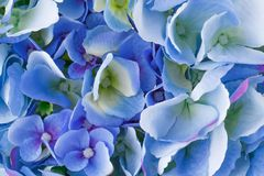 Blue flowers. Blue fabric flowers closeup picture Stock Image