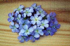 Blue flowers of flax Royalty Free Stock Photography