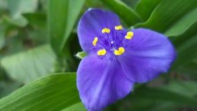 Blue flowers. Blue, flower, morning, sky, grass, garden Stock Photos
