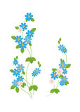 The blue flowers of forget-me - Royalty Free Stock Photography