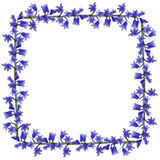 Blue flowers frame Stock Photography