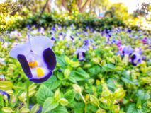 Blue flowers. In the graden Stock Images