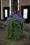 Blue Flowers. Royalty Free Stock Photos