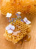 Blue flowers and honeycomb Stock Images