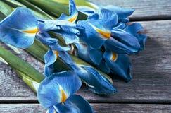 Blue flowers irises Royalty Free Stock Image