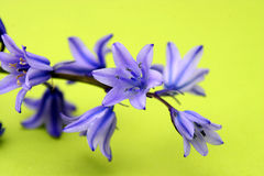 Blue Flowers Isolated Stock Photos