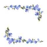 Blue flowers isolated on white background Stock Photo