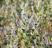 Blue flowers in nature. A blue flowers in nature . A photo stock photo