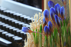 Blue flowers near book Royalty Free Stock Images