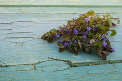 Blue flowers on an old painted wood. Little blue flowers on an old blue painted wood with vintage toning Royalty Free Stock Photos