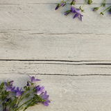 Blue flowers on painted textured wood Royalty Free Stock Images