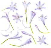 Blue flowers and parts isolated on white background Royalty Free Stock Images