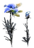 Blue flowers set. Watercolor and ink illustration of blue flowers and leaves royalty free illustration