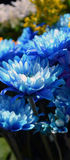 Blue flowers. In the summer sun Royalty Free Stock Images