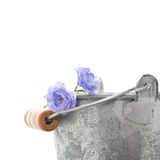 Blue flowers and a tin bucket Stock Photos