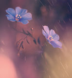 Blue flowers under rain Stock Photos