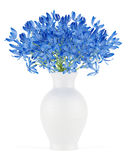 Blue flowers in vase isolated on white Royalty Free Stock Photo