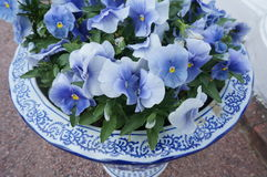 Blue flowers in vase. White and blue vase with blue and white flowers inside Royalty Free Stock Images