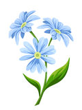 Blue flowers. Vector illustration. Stock Image