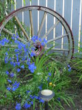 Blue Flowers & Wagon Wheel. Antique wagon wheel fronted by dainty blue flowers stock image