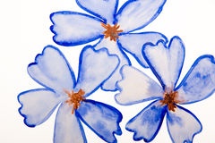 Blue flowers water color Royalty Free Stock Images