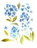 Blue flowers flax. Watercolor illustrations blue flax.