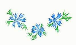 Blue flowers on white background. royalty free illustration