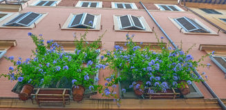 Blue flowers on windows. Building from Rome City Royalty Free Stock Photography