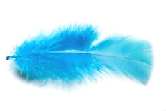 Blue fluffy feather Stock Images