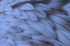 Blue fluffy feather closeup Stock Photography