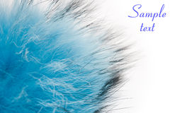 Blue fluffy fur Royalty Free Stock Image