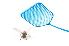 Blue flyswatter attacking a fly isolated on a white background, royalty free stock photography