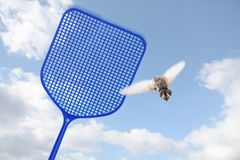 Blue flyswatter hunting a flying fly against a blue sky with cl royalty free stock photo