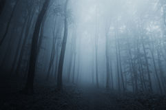 Blue fog in dark mysterious forest on Halloween. Night royalty free stock photos