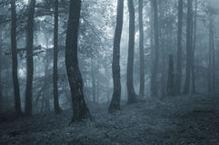 Blue fog in a mysterious forest in autumn Royalty Free Stock Photos