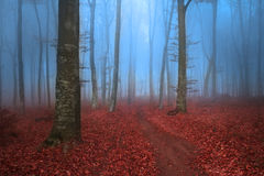 Blue foggy day and red leaves in fairytale forest. Autumn mist in a romantic forest with red leaves on the ground stock images
