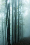 Blue foggy mystical forest stock photo