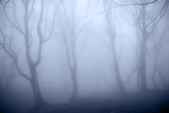 Blue Forest Stock Photography