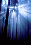 Blue forest. Romanian blue forest with light ray Royalty Free Stock Photography