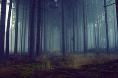 Blue forest with fog and cold light Royalty Free Stock Image