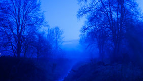 Blue Forest. Blue foggy forest before dark Stock Images