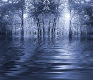 Blue forest by a river Royalty Free Stock Photos