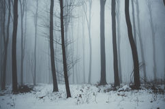 Blue forest in winter with fog and snow. Forest in winter with blue fog in the evening with fog and snow Royalty Free Stock Photography