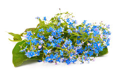 Blue forget-me. A bouquet of blue spring flowers with a light shadow on a white background Stock Photography
